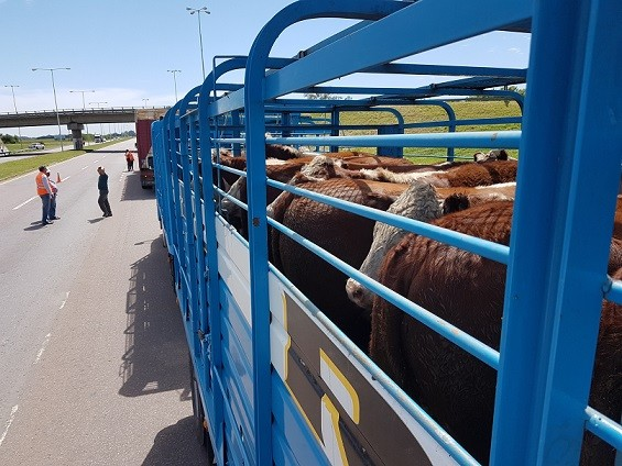 SENASA CONTROLÓ LA CARGA DE MÁS DE 2500 TRANSPORTES EN RUTAS DEL NORTE BONAERENSE