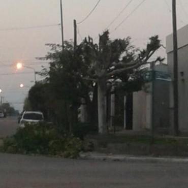 LABRARON INFRACCIONES A VECINOS QUE REALIZARON PODA DE ARBOLADO PUBLICO SIN AUTORIZACION