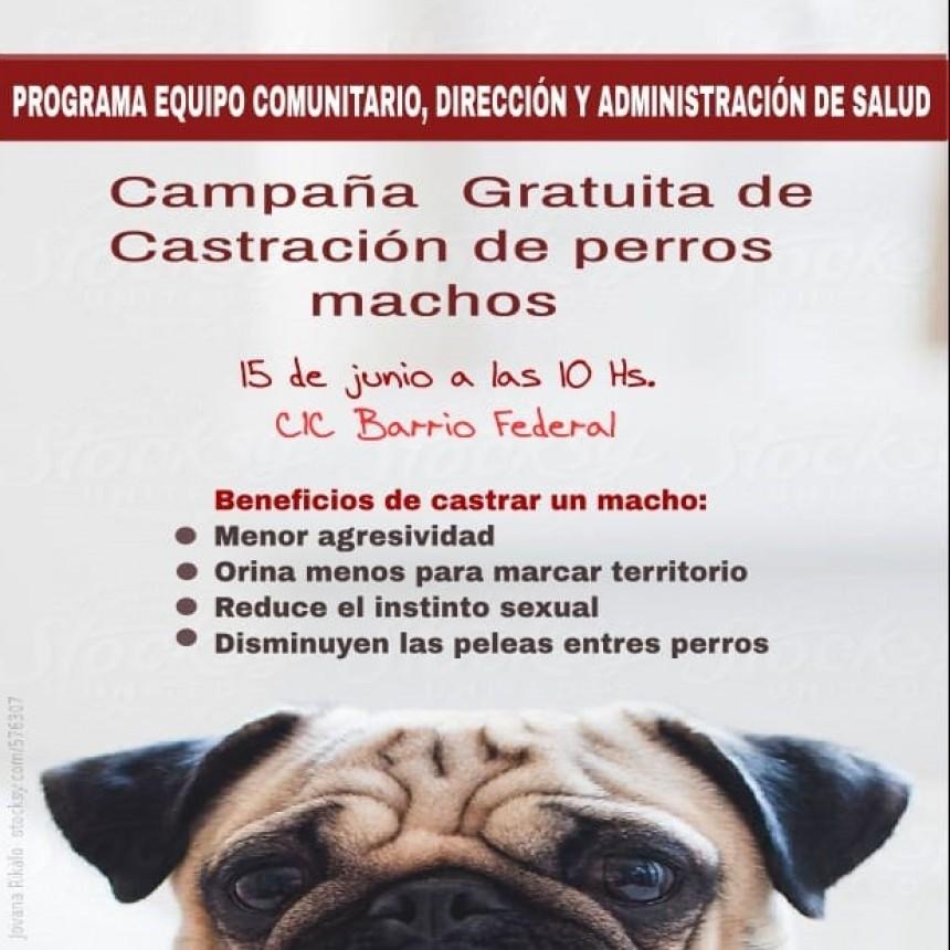 REALIZARAN CAMPAÑA DE CASTRACION DE PERROS MACHOS