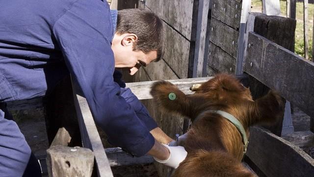 SENASA: EL 1 DE OCTUBRE VENCE EL PLAZO PARA LA REACREDITACIÓN EN PROGRAMAS DE SANIDAD ANIMAL