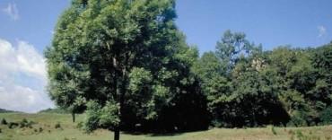 ENTREGAN PLANTAS PARA FORESTACION RURAL