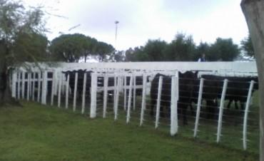 ARRANCO LA EXPO TRES LOMAS